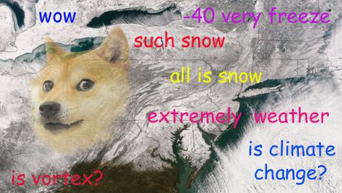 doge_winter