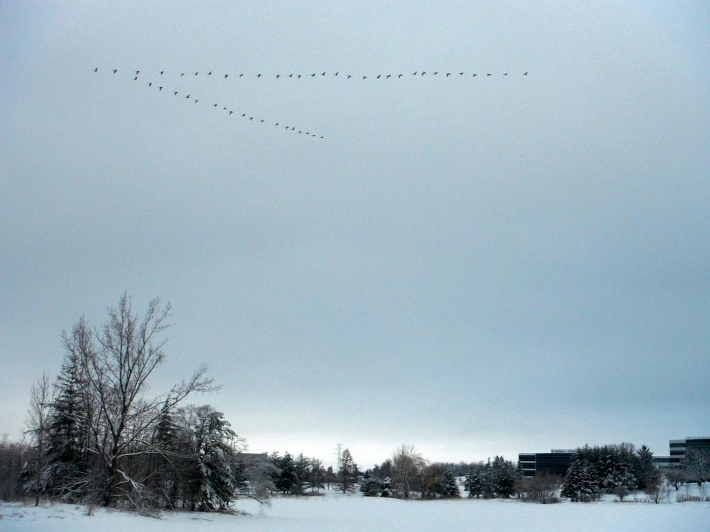 Geesies over Columbia Lake